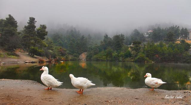 παπιες,λιμνη,ομιχλη,χρωματα,παρνηθα,υδροβιοτοπος,φυση, Κώστας Λαδάς